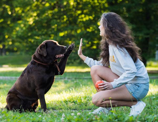 perro-personalidad-articulo